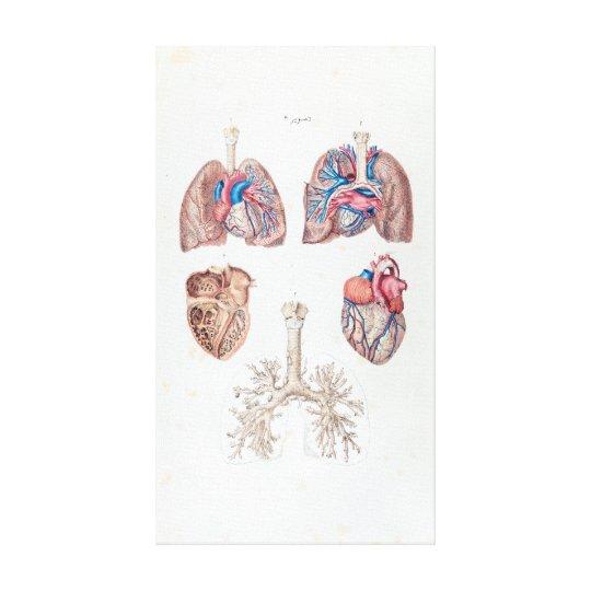 Vintage Anatomie des menschlichen Herzens und der Leinwanddruck   Zazzle