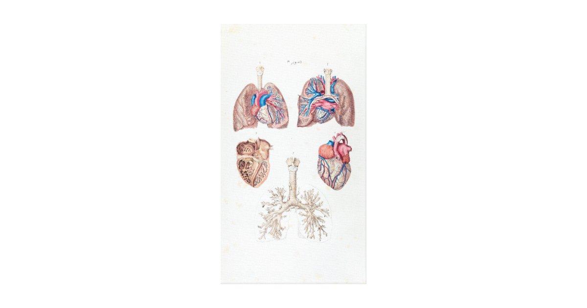 Vintage Anatomie des menschlichen Herzens und der Leinwanddruck | Zazzle