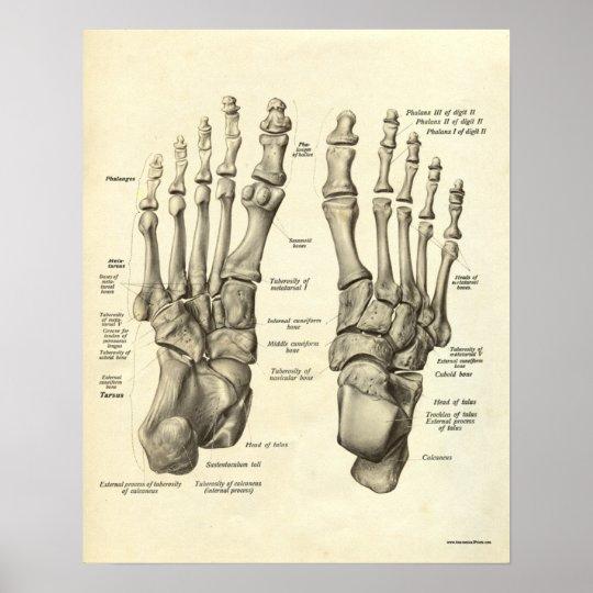 Vintage Anatomie-Druck-Knochen des Fußes Poster | Zazzle