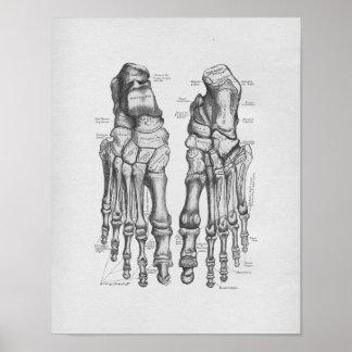 Vintage Anatomie-Illustrations-Fuß-Knochen Poster