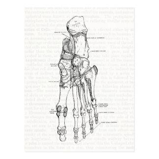 Vintage Anatomie-Kunst-Knochen des Fußes Postkarte