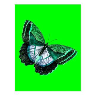 Vintage antike grüne Schmetterling 1800s Postkarte