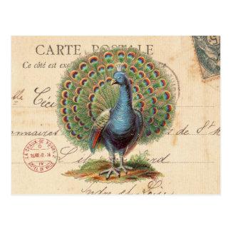 Vintage antike Pfaupostkarte Postkarte