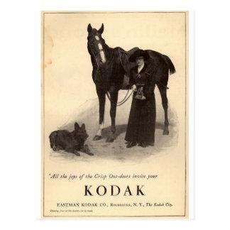 Vintage Anzeigen, die Tiere kennzeichnen Postkarte