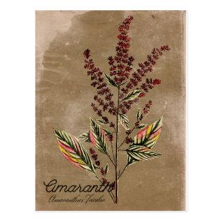 Vintage Art-Amarant-Pflanze Postkarte