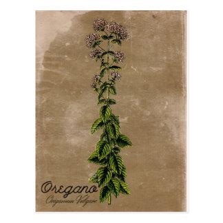 Vintage Art-Oregano-Postkarte Postkarte