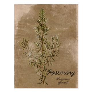 Vintage Art-Rosemary-Kraut-Postkarte Postkarte