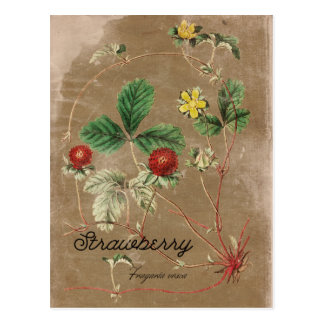 Vintage Art-Walderdbeere-Postkarte Postkarte