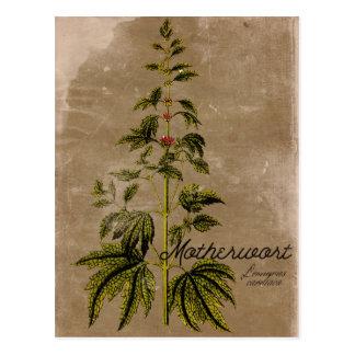 Vintage Artmotherwort-Kraut-Postkarte Postkarte