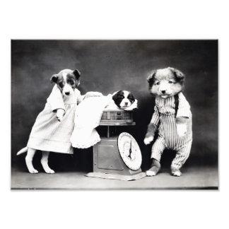 Vintage B&W Hunde in der Kleidung mit Kunst Foto