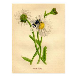 Vintage Biene und Gänseblümchen Postkarte