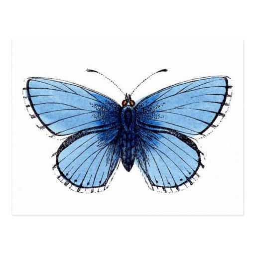 Vintage blaue Schmetterlings-Postkarte
