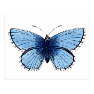 Vintage blaue Schmetterlings-Postkarte Postkarte