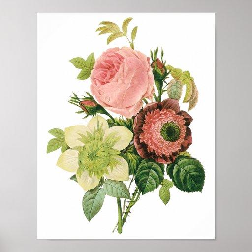 Vintage Blumen, Anemonen-RosenClematis durch Redou Plakat