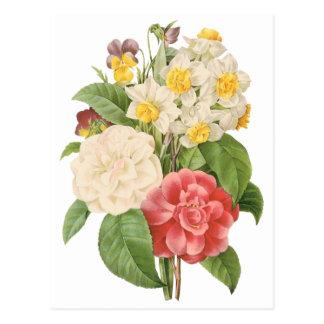 Vintage BlumenCamelia Narzissen-Blumen durch Postkarte