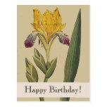 Vintage Botanicals Iris-alles- Gute zum Postkarte
