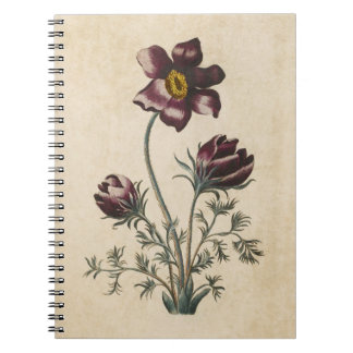 Vintage botanische BlumenPasque Illustration Notizblock