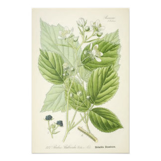 Vintage botanische Illustration Fotografien