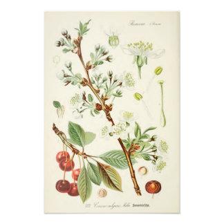Vintage botanische Illustration Kunstphotos