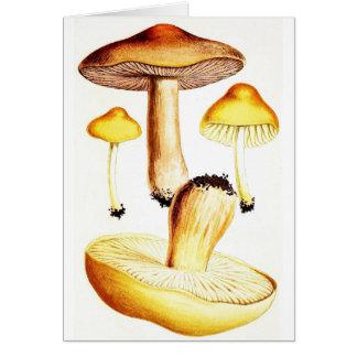 Vintage botanische Pilze Karte