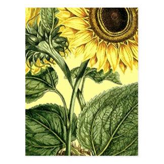 Vintage botanische postkarte
