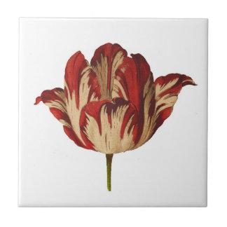 Vintage botanische Rembrant Tulpe-Keramik-Fliese Keramikfliese