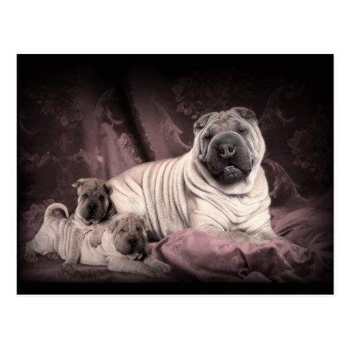 Vintage Chinese Shar Pei Falten, Welpen-Hunde Postkarte