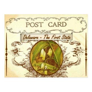 Vintage Delaware-Staats-Blumen-Postkarte Postkarte