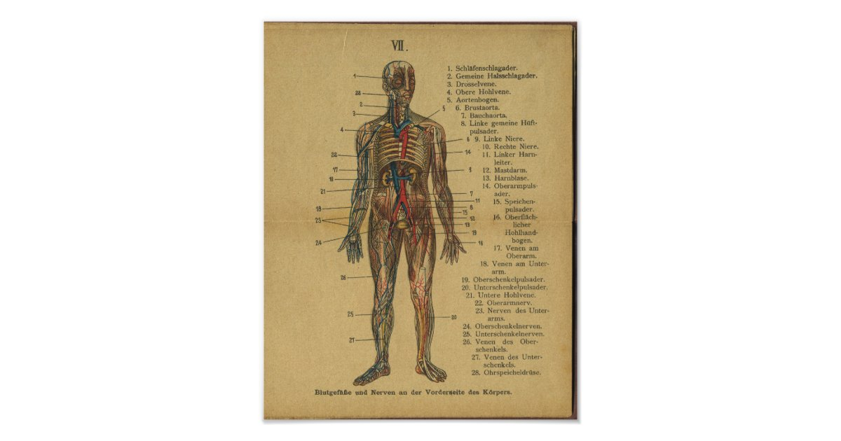 Beste Untere Anatomie Beinvenen Galerie - Menschliche Anatomie ...
