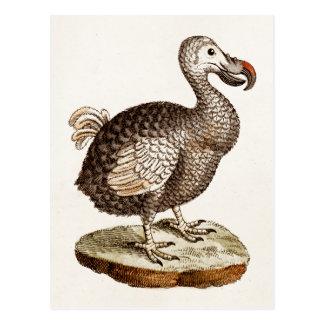 Vintage Dodo-Vogel-Illustration 1700s Dodo-Vögel Postkarte