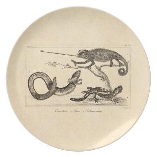 Vintage Eidechsen-Chamäleonsalamander-Illustration Teller