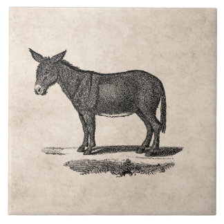 Vintage Esel-Illustration - Esel 1800's Große Quadratische Fliese