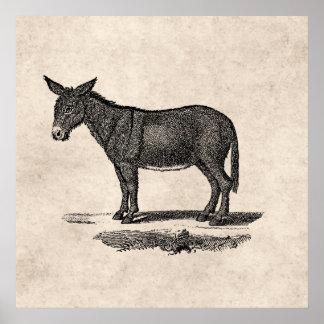 Vintage Esel-Illustration - Esel 1800's Poster