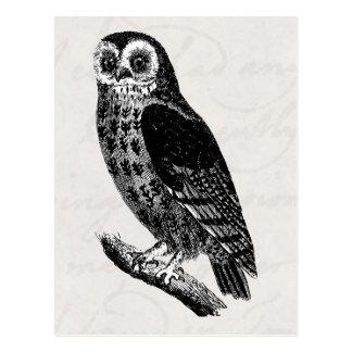 Vintage Eule, die Retro Vogel-Eulen zeichnet Postkarte
