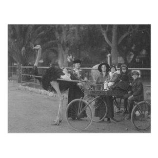 Vintage Familie in Ostrich gezeichnetem Wagen Postkarte