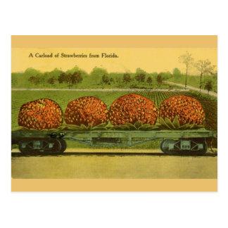 Vintage Florida-Erdbeerreise-Postkarte Postkarte