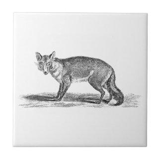 Vintage Foxy Fox-Illustration - Füchse 1800's Kleine Quadratische Fliese