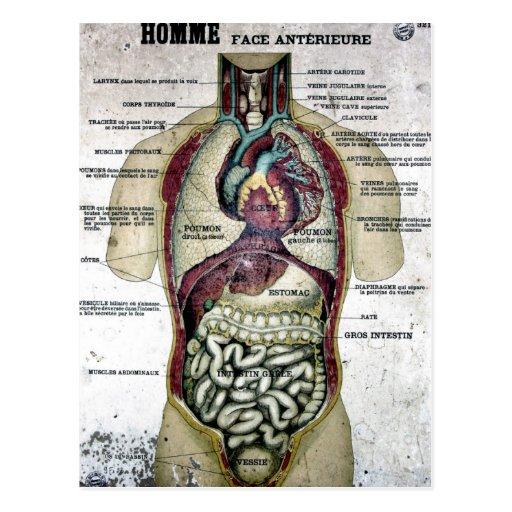 Vintage französische Anatomie-Postkarte