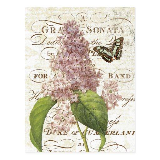 Vintage französische botanische lila Postkarte