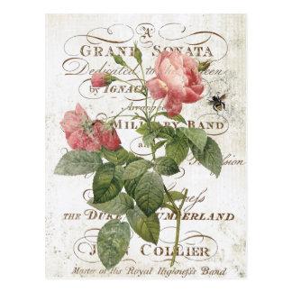 Vintage französische botanische Rosenpostkarte