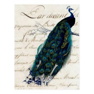 Vintage französische Skript-Pfau-Postkarte