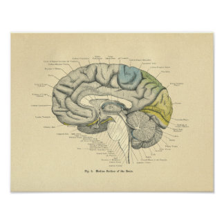 Vintage Frohse anatomische Poster