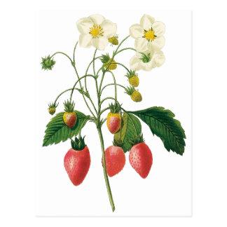 Vintage Frucht-Beeren-Nahrungsmittelerdbeeren Postkarte