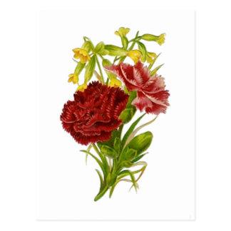 Vintage Gartennelken Postkarte