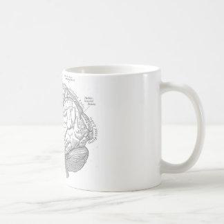 Vintage Gehirn-Anatomie Kaffeetasse