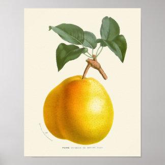 Vintage gelbe Birnen-botanischer Druck Poster