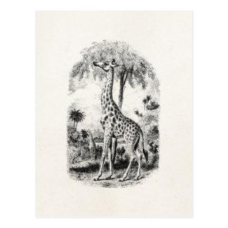 Vintage Giraffen-personalisierte Tierillustration Postkarten