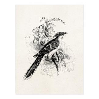 Vintage große gepunktete Kuckuck-Vogel-Retro Vogel Postkarten