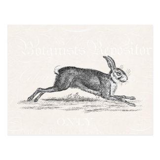 Vintage Hase-Häschen-Kaninchen-Illustration - Postkarte