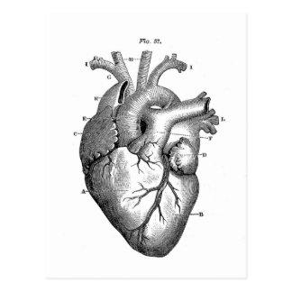 Vintage Herz-Anatomie | kundengerecht Postkarte